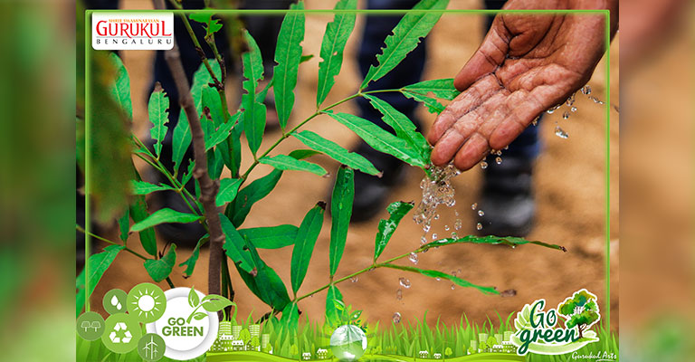 Plant-Need-Water-Go-Green